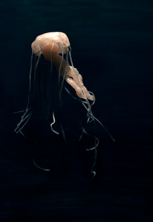 Jellyfish-Jennifer Nichole Wells