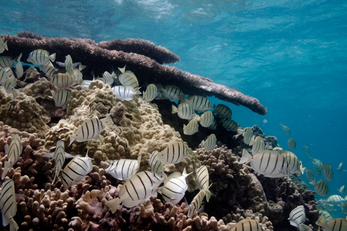 Image by USFWS Pacific Region (CC BY 2.0