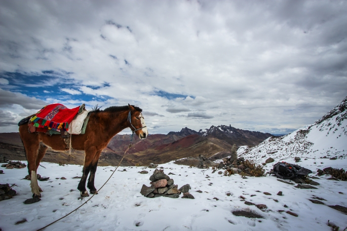 From Ausangate Trek, day 3. Horse at the Palomani Pass.