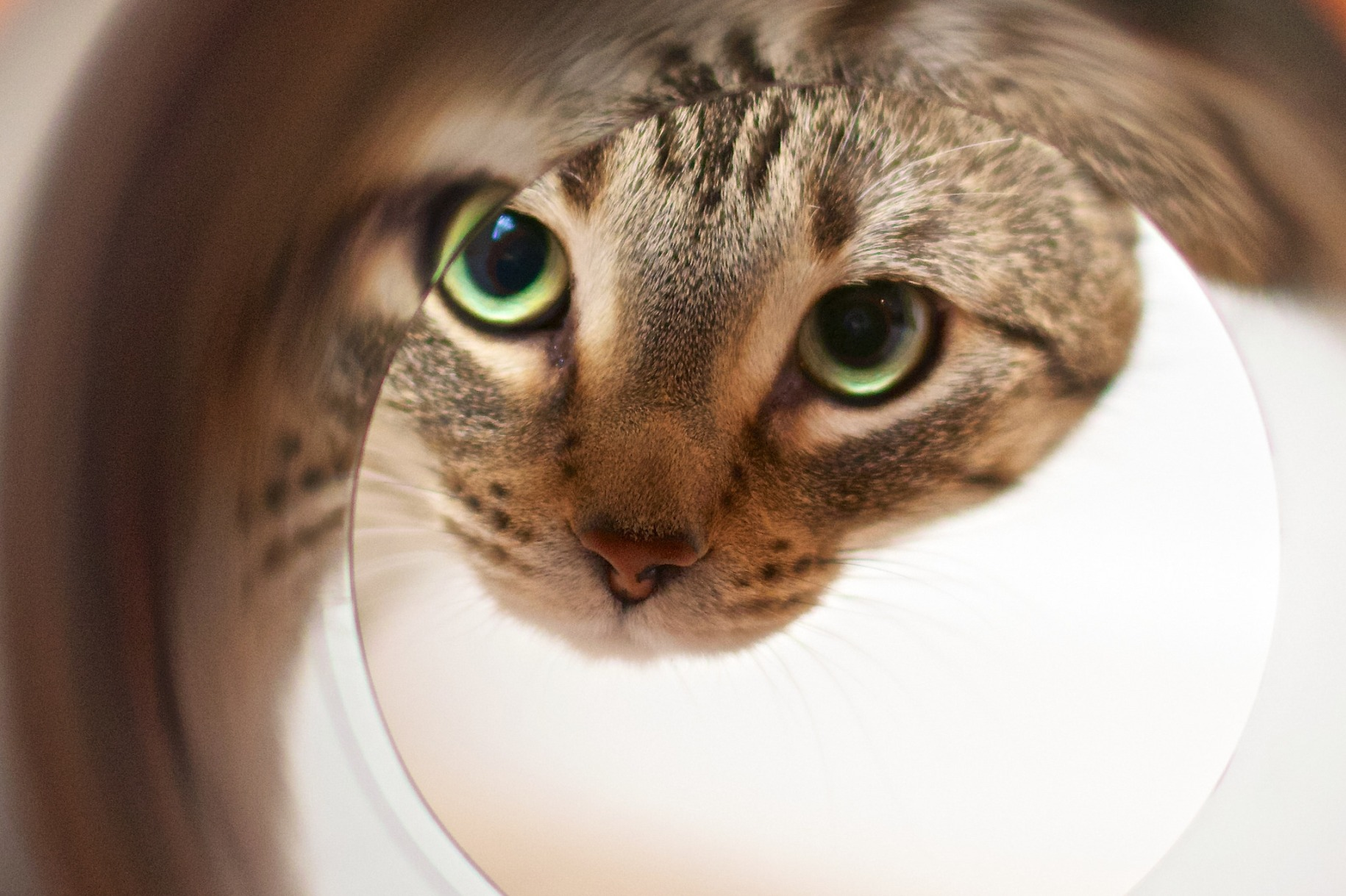 a cat staring down a tube