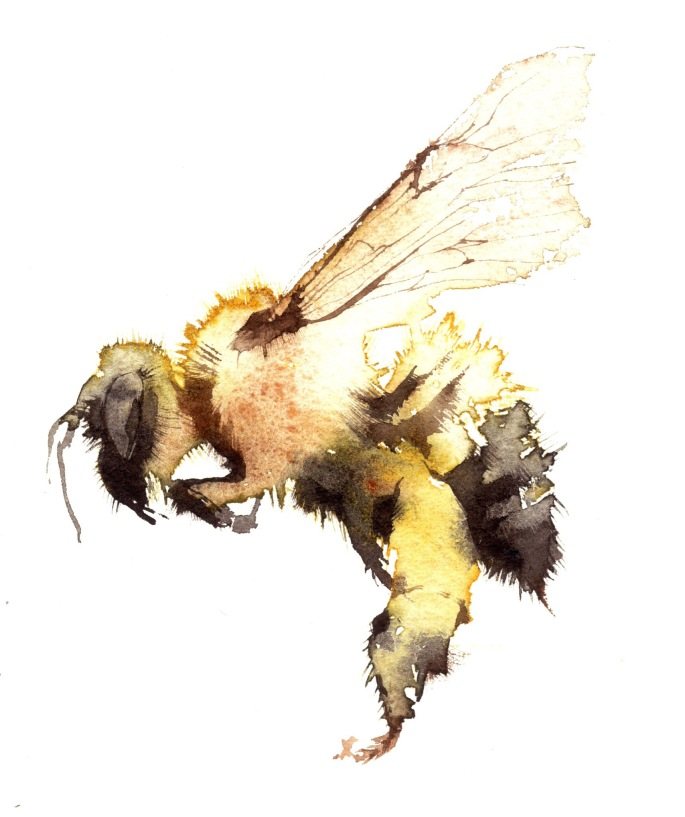 Bee(watercolor) by Kate Osborne.