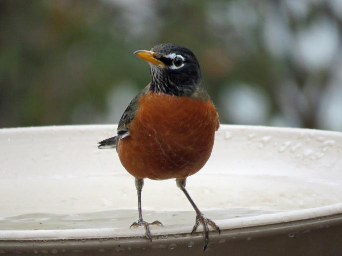1-8-17-first-bird