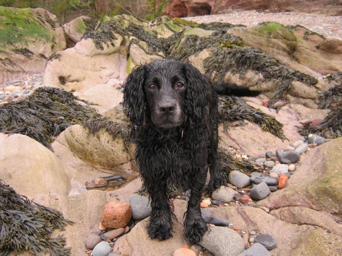 black dog with wet fur