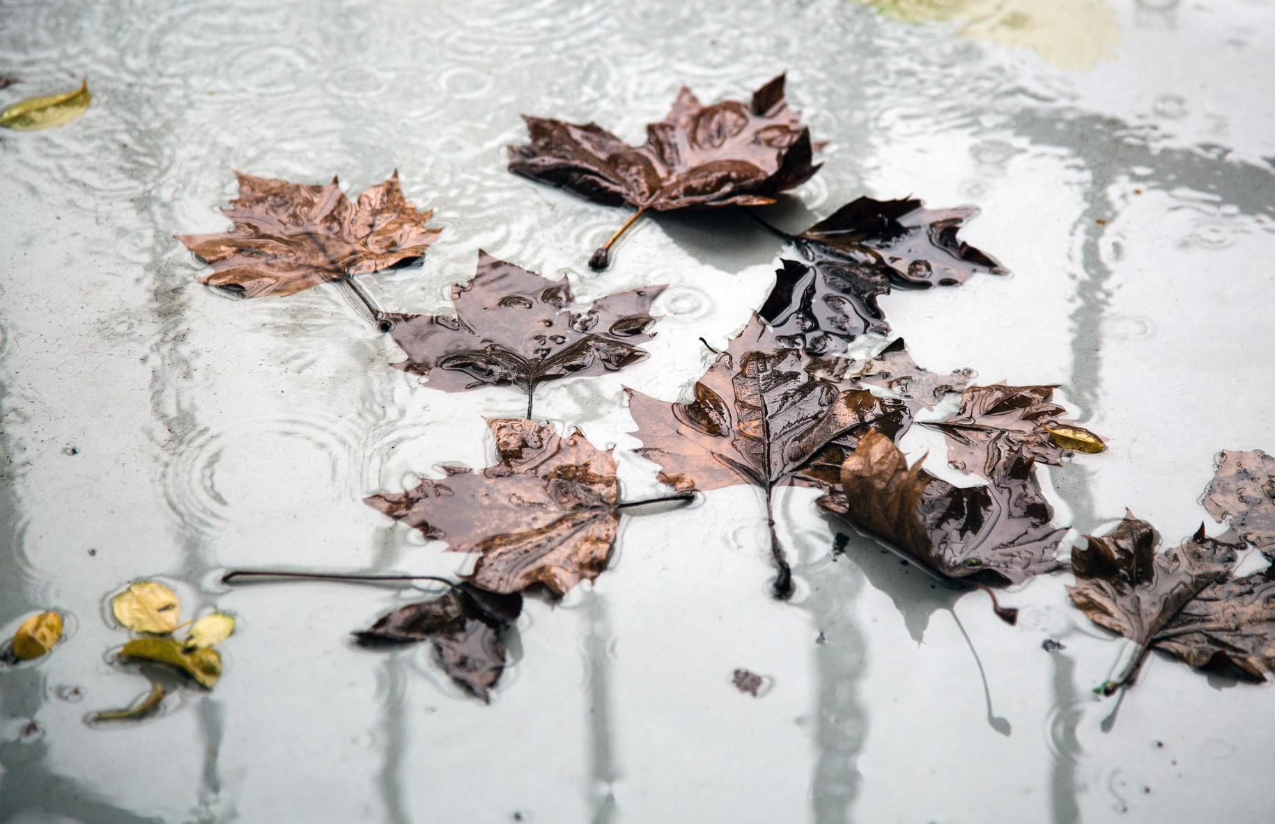 fallen leaves in a puddle of water