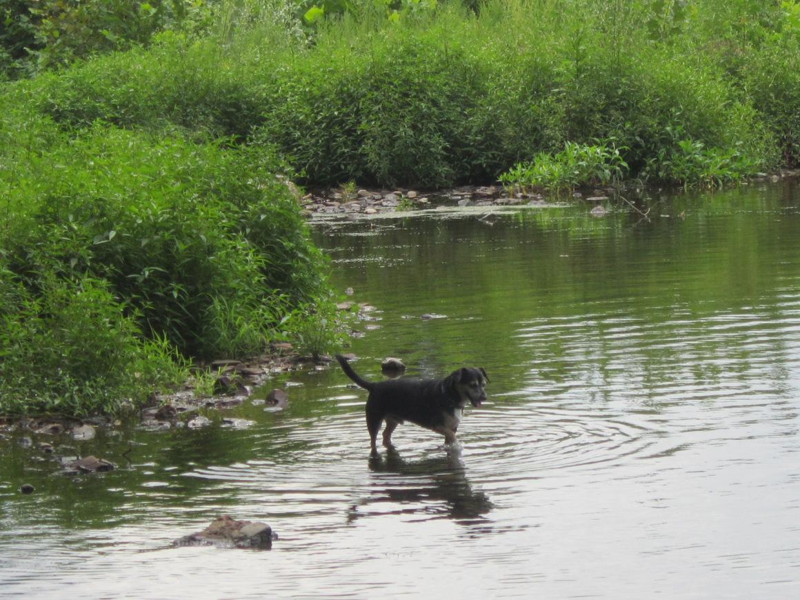 A River Runs North