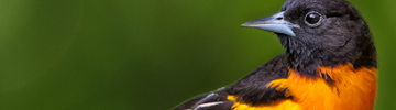 History of Ornithology