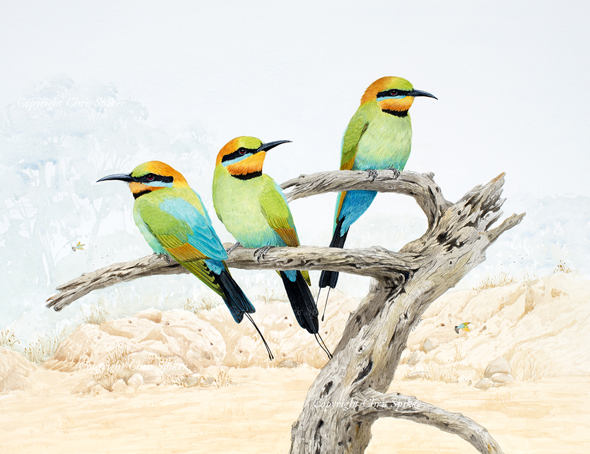 Rainbow Bee Eaters at the Old Quarry