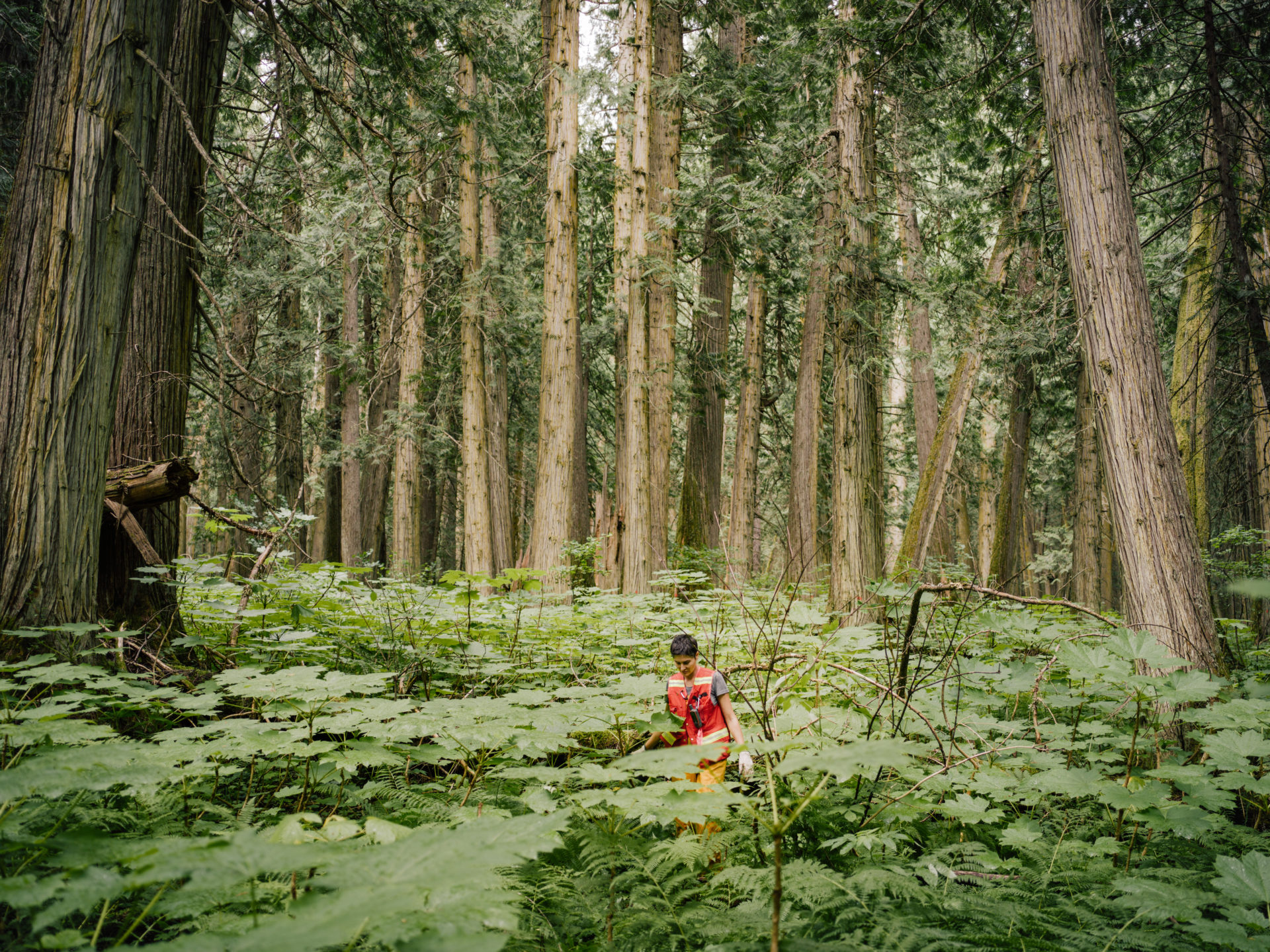 Canada's forgotten rainforest